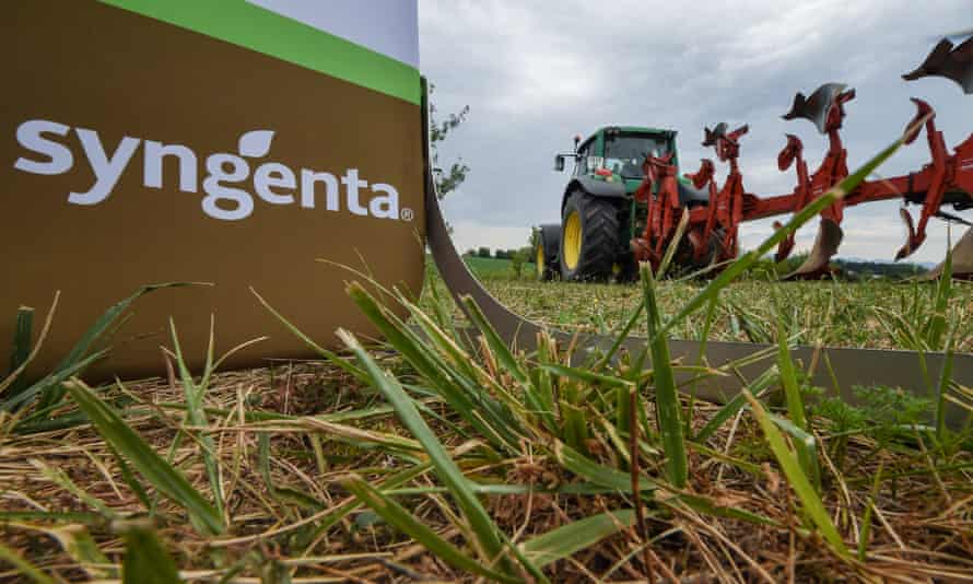 The Sygenta logo pictured at a pilot farm.