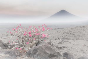 Plants and fungi category winner: Blooming Desert A desert rose shedding its foliage during the dry season and producing flowers instead