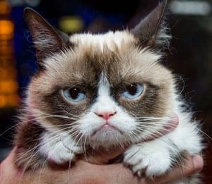 Grumpy Cat in Las Vegas, America - 05 Aug 2014