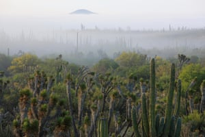 El Vizcaino Biosphere Reserve, Mexico, is part of the Islands and Protected Areas of the Gulf of California, which became a natural world heritage site in 2005 due to its unique marine biodiversity.
