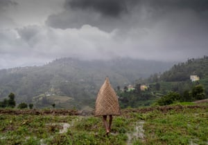 A farmer wearing traditional rain protection 'ghoom' walks in a paddy field during the monsoon in the village of Nuwakot, Nepal.
