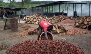 Palm oil workers