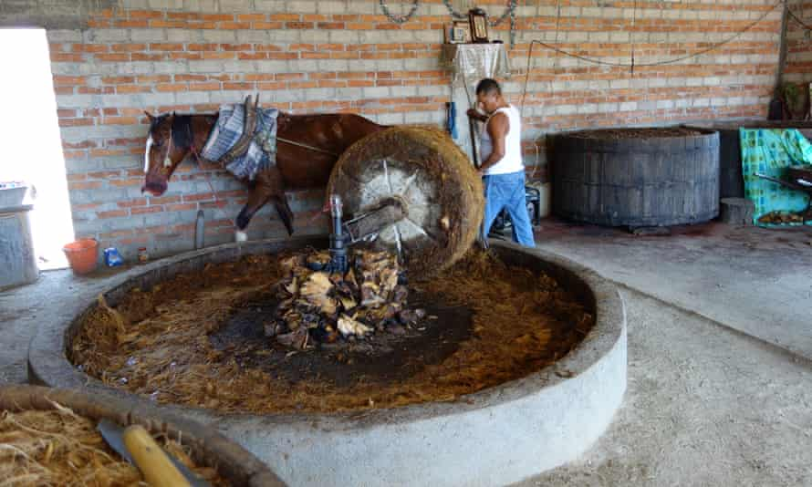 Crushing baked agave with a horse and a multi-ton stone wheel to make mezcal
