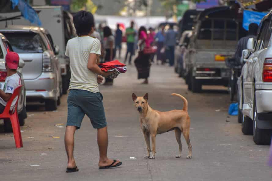 Stray dogs on the streets of Yangon, Myanmar, December 2016