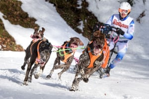 Todtmoos, GermanyDogs pull a competitor's sled during the 2017 International Dog Sled Races . Over 100 mushers are competing in the two-day race deep in the Black Forest