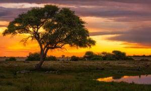 Sunset in Etosha national park, northern Namibia.