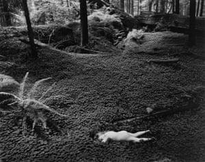 Wynn Bullock, Child in Forest 1951