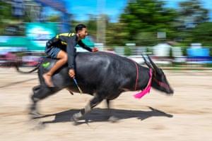 Chonburi, Thailand A jockey rides during the annual Chonburi buffalo race