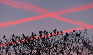 Rooks watching the dawn The dawn lit up the contrails in Kirtlington, north of Oxford. I live nearby so I'm lucky enough to see the rookery in all seasons. What the photo doesn't capture is the noisePhotograph: Sarah J Bryson/GuardianWitness