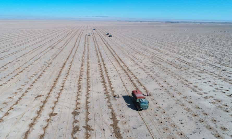 Saplings being planted in Inner Mongolia this year to control desertification as temperatures rise.