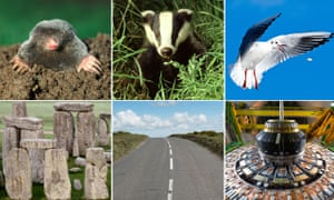 Moles, badgers and seagulls (top row) have been causing problems for (above l-r) Stonehenge, roads and the Large Hadron Collider.