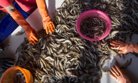 Female workers sort shrimp at a seafood market in Mahachai, Thailand. Human trafficking has helped turn Thailand into one of the world's biggest shrimp providers.
