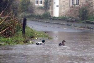 Ducks swim across a flooded road