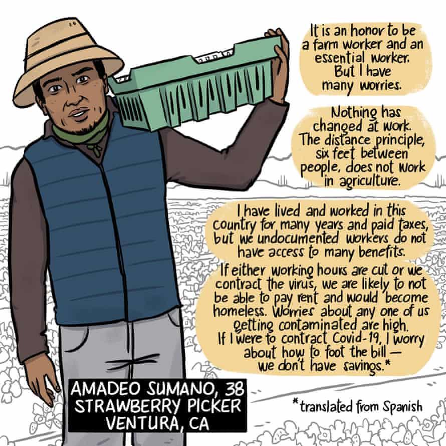 Amadeo Sumano, strawberry picker
