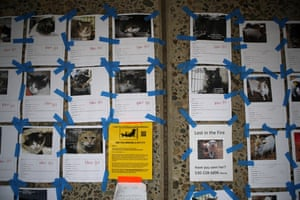 A wall at an elementary school is covered with pictures of pets that are still missing.