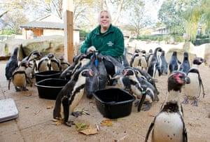 Zuzana Matyasova feeds the penguin