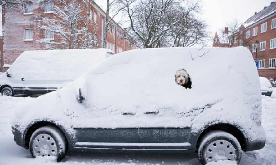 Dog peeking from snow-covered car