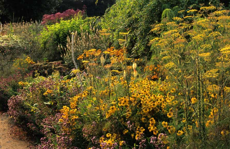A colour-themed golden border with heleniums, fennel, oregano and veronicastrums, at Parham in Sussex