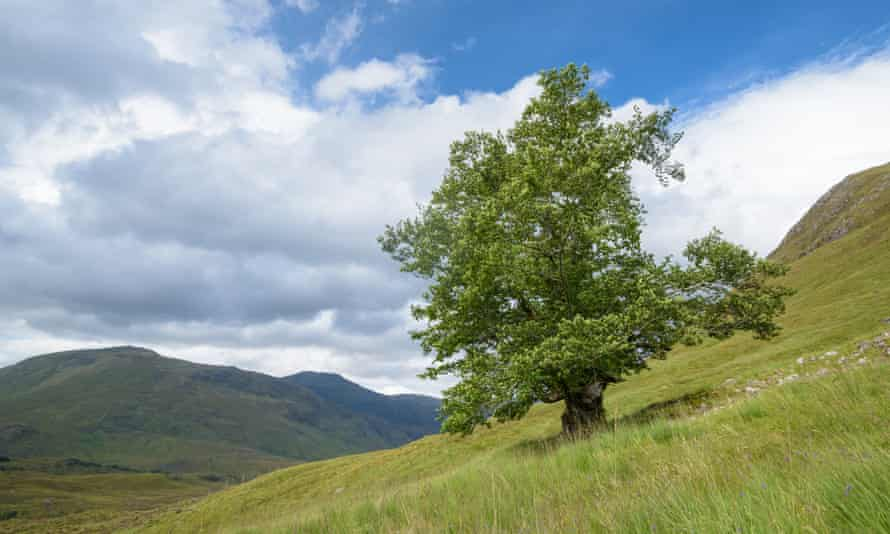 The Last Ent of Affric.