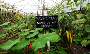 Photograph of plants in greenhouse with sign that reads 'Saving seed please do not harvest'.