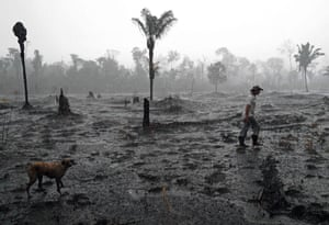 A burnt area of the Amazon rainforest in Rondônia state, Brazil. Vast tracts of rainforest on three continents went up in smoke in 2018, with an area roughly the size of Switzerland cut down or burned to make way for cattle and commercial crops, reports based on satellite data show.
