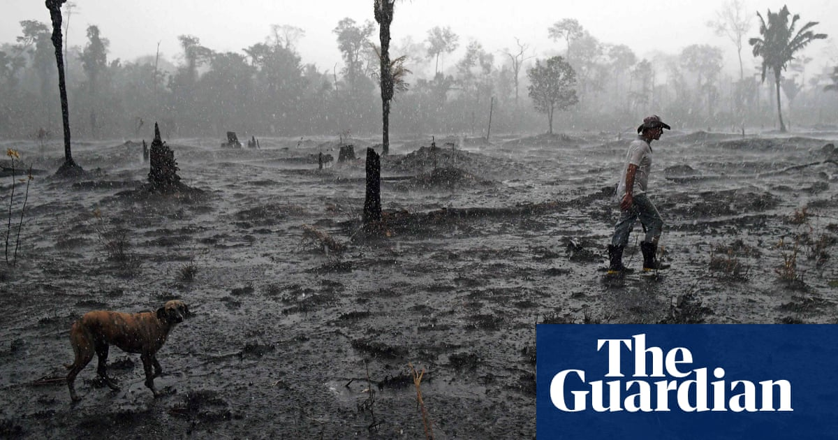 Revealed: UK banks and investors' $2bn backing of meat firms linked to Amazon deforestation