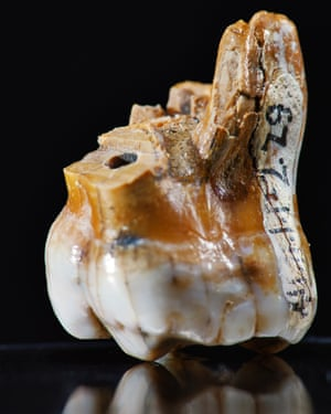 A molar tooth found at Denisova Cave.