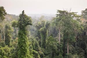 Floresta tropical perto da costa do cabo em Gana.