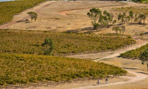 Cyclists on the Clare Valley's Riesling Trail