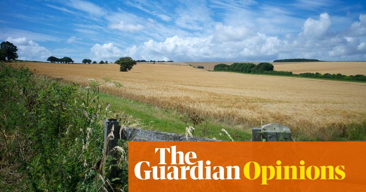 The ersatz hedge: how we're debasing England's rural landscape
