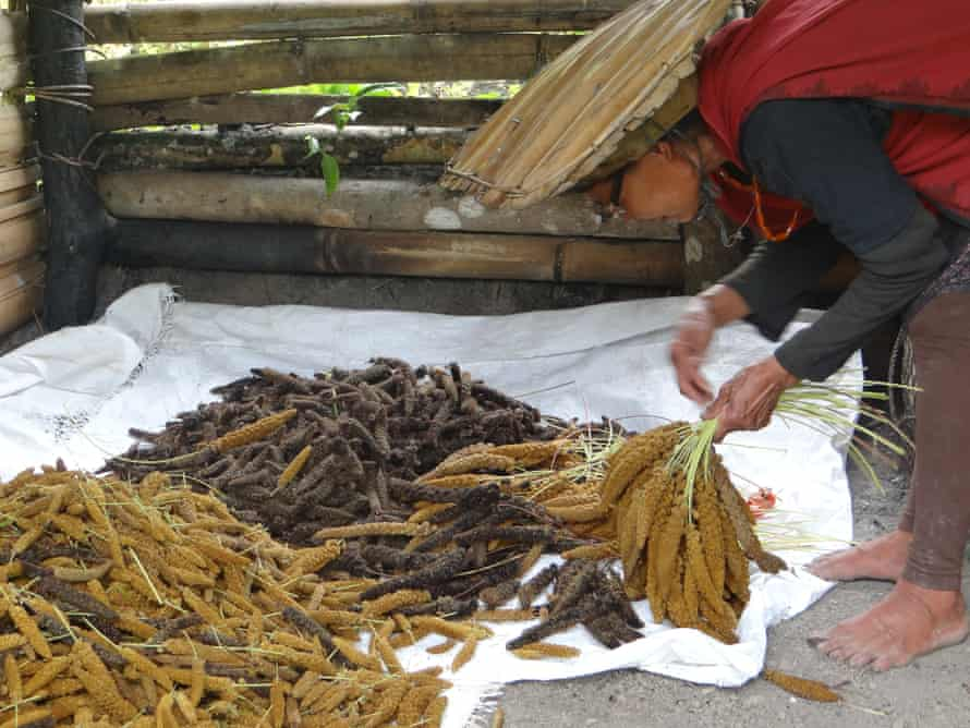 Eyietshünyi-ü Lasuh selects healthy stalks from her millet harvest to be dried and stored as seeds.
