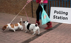 Taking the lead: two dogs arrive at a polling station in Gillingham, Kent