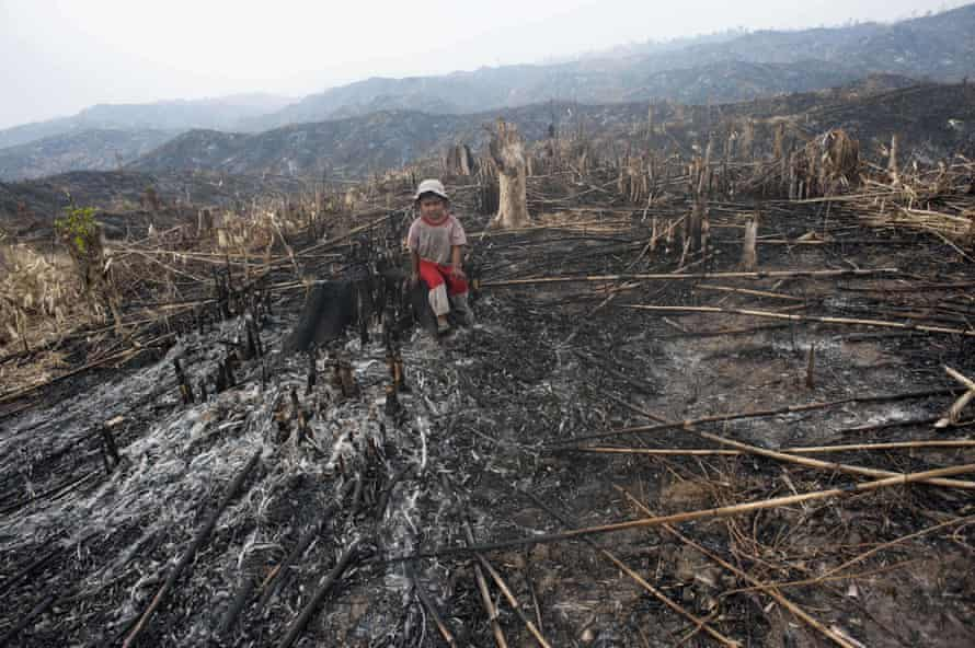 A child sits where teak trees once grew in the Bago region of Myanmar after the land was scorched ahead of replanting.