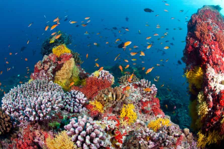 A coral reef at Ari Atoll in the Maldives.