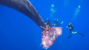 Still footage from a video clip shows Italian coastguard divers trying to free a sperm whale caught in a fishing net at sea north of the Sicilian Aeolian Islands