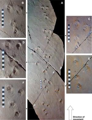 Brasilichnium saltatorium trackways from the Botacatu Formation in Brazil.