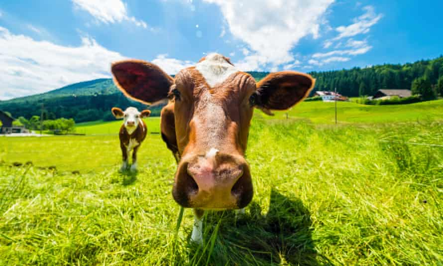 Jan Langbein, at the Research Institute for Farm Animal Biology in Germany, hopes that 'in a few years all cows will go to a toilet'.