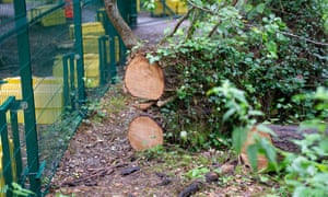 Trees cut down by HS2 to make space for the erection of large fences in Colne Valley