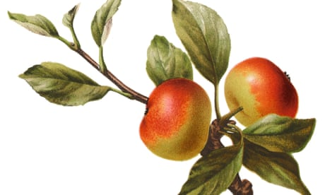 Forget granny smiths – here are 10 great apples you need to try