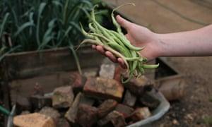 Beans Oasis farm