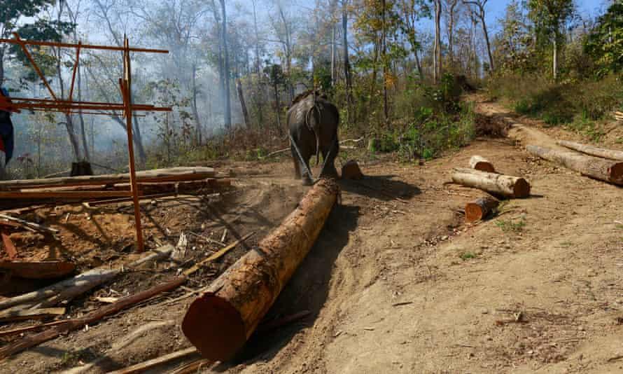 Logging in Myanmar