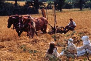 Harvest horses