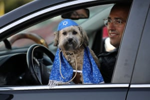 Toronto, Canada: Rocky Kel Lev, a seven-month old havanese dog, at a drive-in service called the 'Shofarpalooza' marking Rosh Hashanah, the Jewish new year