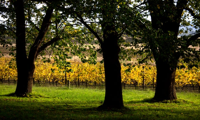 Going green: The path to a zero-waste winery with label 17 Trees