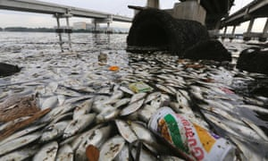 Dead fish float on the edge of Guanabara Bay, a part of which is the Rio 2016 Olympic Games sailing venue. The polluted bay receives a majority of the city's raw sewage and officials have recently admitted their cleanup goals won't be met in time for the Olympics.