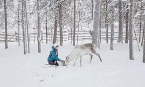 Herder Anni Saara Aiko feeds her reindeer near Vuotso, Lapland.