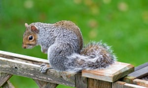'She doesn't just greet us at the door, she follows us': a friendly little squirrel.