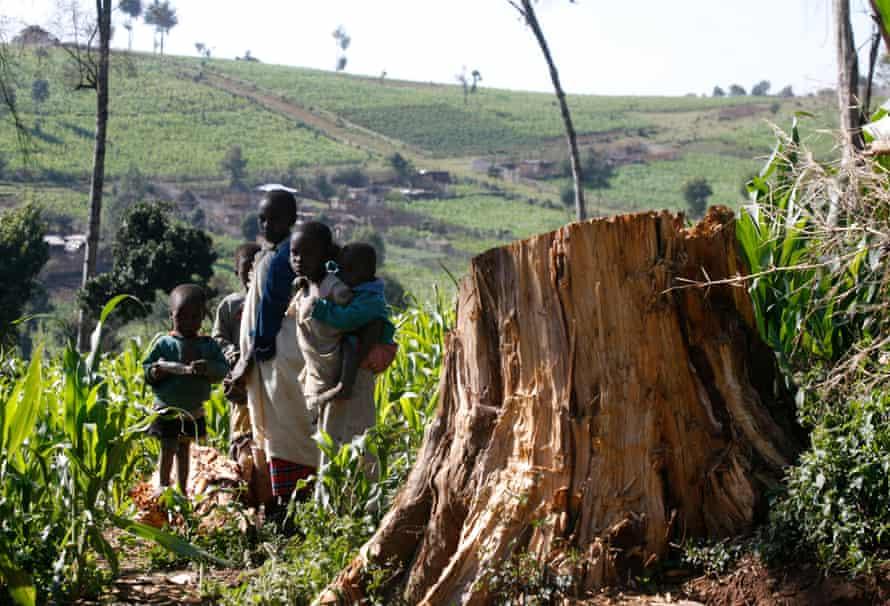 Children stand near tree stump