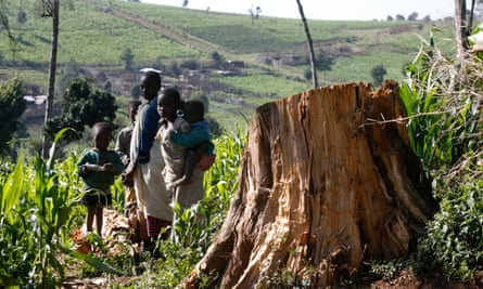 Children stand near tree stamp in Mauche settlement scheme of Mau Forest area in the Rift Valley of Kenya.