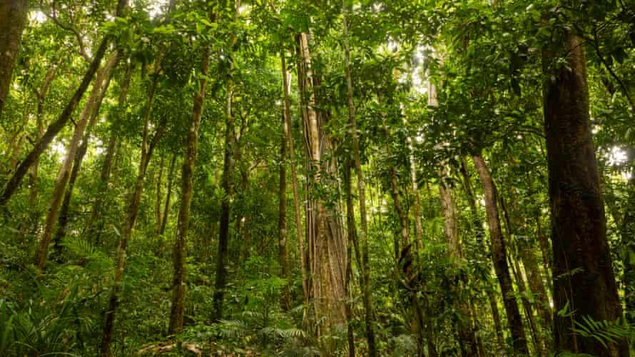 The rainforest around Mossman Gorge in Queensland's wet tropics.